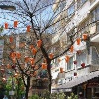 Симпатичное деревце (повседневная жизнь Стамбула) :: Юлия Фотолюбитель