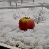 Яблоко на снегу :: Анатолий Чикчирный