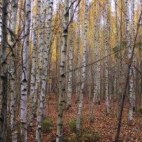 В октябрьский лес за грибами :: Татьяна Ломтева