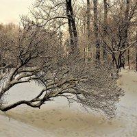 Чудеса зимы прекрасной... :: Sergey Gordoff
