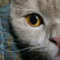 мой кот :: Galina Belugina