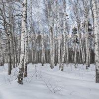 Зимний лес :: Ирина Шарапова