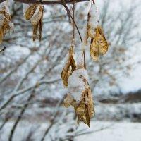 Под снежным одеялом 4 :: Мария Букина