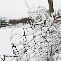 Под снежным одеялом :: Мария Букина
