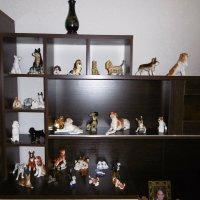 Коллекция собак :: татьяна