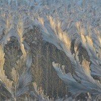 Рисует узоры мороз (серия) :: Александр Яценко