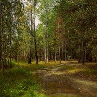 В лесу :: Оксана Галлямова