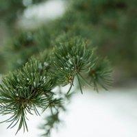 немного снега в феврале :: Энвер Крымский
