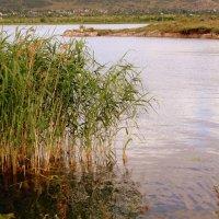 Вода , вода , кругом вода. :: Мила Бовкун