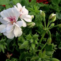 Незнакомый цветок :: Сергей Карачин