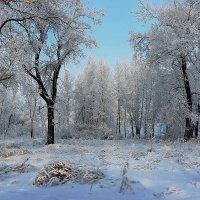 В снежном уборе.. :: Наталья Юрова