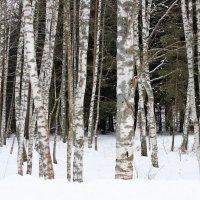 Зимний лес. :: Ираида Мишурко
