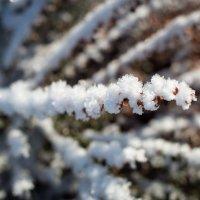 Махровые ветви :: Олеся Загорулько