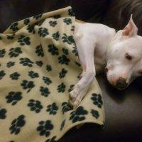 спать пора, уснул бычок, лег в кроватку на бочок :: Ольга Богачёва