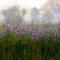 утро..туман... :: юрий иванов