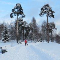 Зимняя прогулка :: Ирина Олехнович