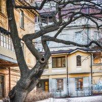 Дерево истории :: VV Kurov Куров