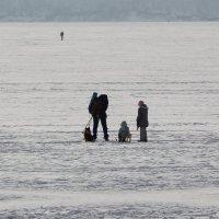 Всей семьёй на прогулку. :: Андрей
