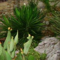 Кактусы. Никитский ботанический сад. Крым. :: Любовь К.