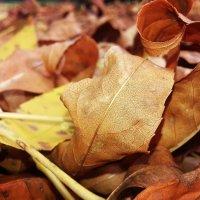 Золотая Осень :: Дарья Логвинова