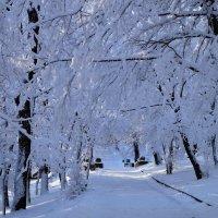 Зима в разгаре :: MPS