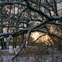 Деревья танцуют под музыку ветра ... :: Евгений Юрков