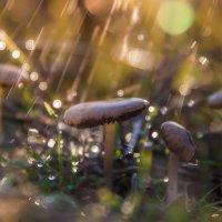 Грибной дождь :: Алина Шостик