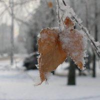 после зимнего тумана :: Igor Osh
