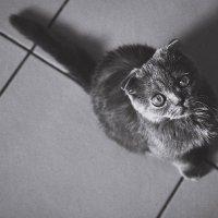 Cat :: Алёна Куклина