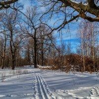 Лыжня через дубовую рощу :: Андрей Дворников