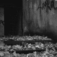 Здравствуй, моя бесконечная осень... :: Павел Зюзин