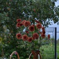Осенью в саду :: ЕСЕНИЯ ♥