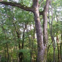 Двоящееся дерево :: Виктор Мухин