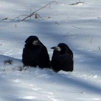 Кумушки на снегу :: Татьяна Смоляниченко