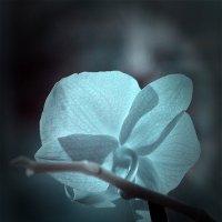 Инфракрасная орхидея :: Alexander Varykhanov