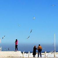 чайки, море, февраль... :: Александр Корчемный