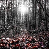 Осенний лес в Тюрингии. :: Александр Селезнев