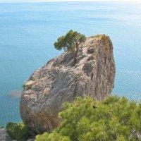 Одинокая сосна на куске каменной горы... Сила жизни... ! :: Сергей Яворский