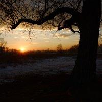 В лучах заходящего солнца :: Светлана Грызлова