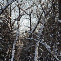 Зима в парке :: Людмила