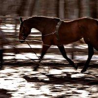 Чуть помедленнее кони, чуть помедленнее... :: Анатолий Шулков