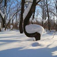 В февральском лесу :: Андрей Заломленков