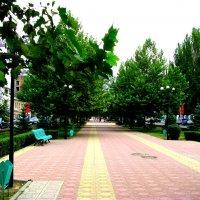 Махачкала. Бульвар на проспекте Р. Гамзатова. :: Владимир Драгунский