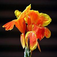Балийские цветы (4/5) :: Асылбек Айманов