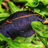 Слизняк и мелкие рыжие муравьи (Или Охота на динозавра) ))) :: Александр