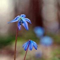 Немного о весне зимой... У дубов колдунов... :: Александр Резуненко