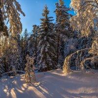 Карельский лес. :: Фёдор. Лашков