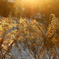 Январское солнце :: Татьяна