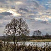 Ранняя зима :: Лара Симонова