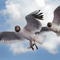 Чайки :: Наталия